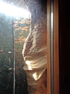 Nido di vespe calabro situato tra finestra e serramento esterno