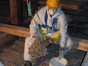 Operatore Exera durante la bonifica da guano di piccione.