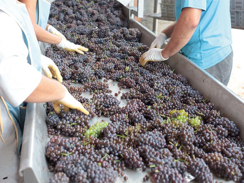 Azienda vinicola con infestazione mosche