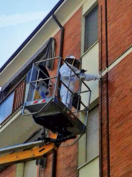 Disinfestazione nido vespe con cestello elevatore.