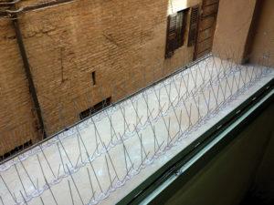 Installazione di un dissuasore a spillo contro i piccioni, presso Teatro Comunale di Ferrara.