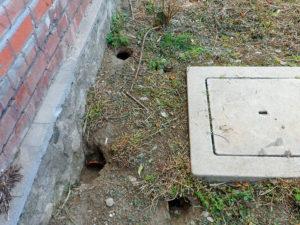 Insediamento di ratti con tane nel terreno