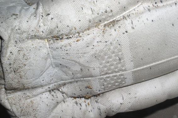 Materasso infestato dai cimice dei letti