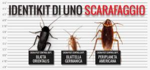 riconoscere uno scarafaggio