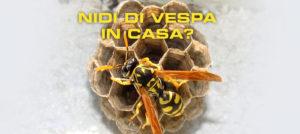 Nidi di vespa