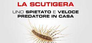 slide-scutigera-exera