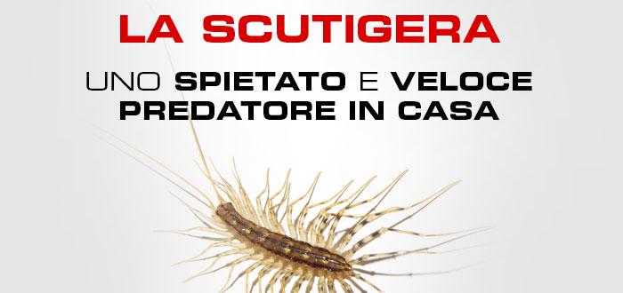 slide scutigera