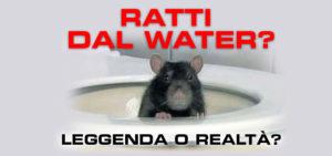 Ratti che escono dal water