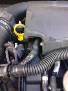 Danni causati da topi nell'auto